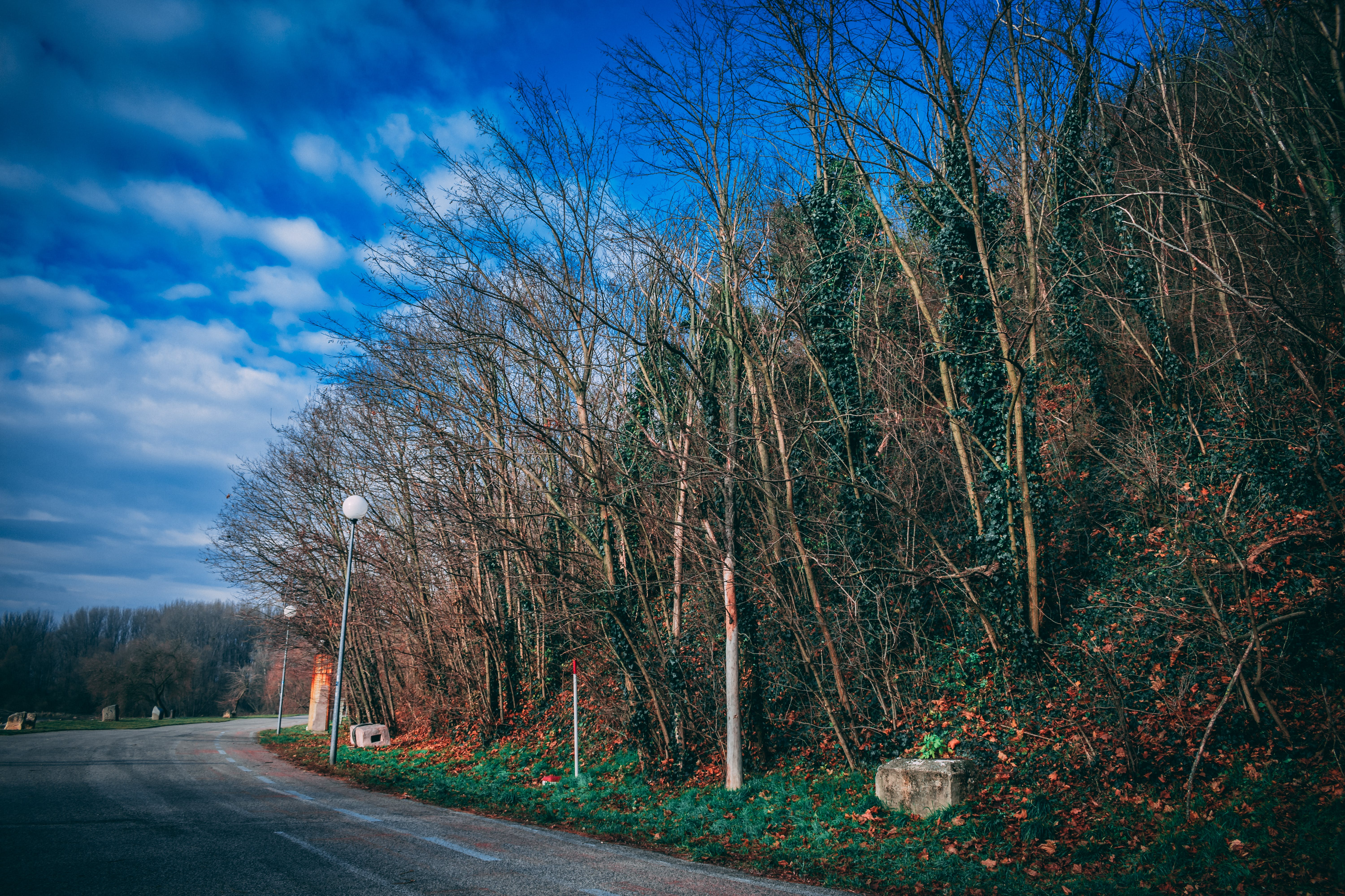 Trees By The Road