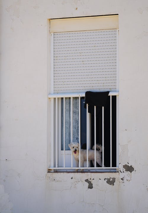 Fotos de stock gratuitas de perro, perro guardián, puerta