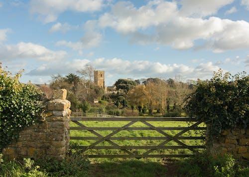 Бесплатное стоковое фото с ворота, деревня, плющ, поле
