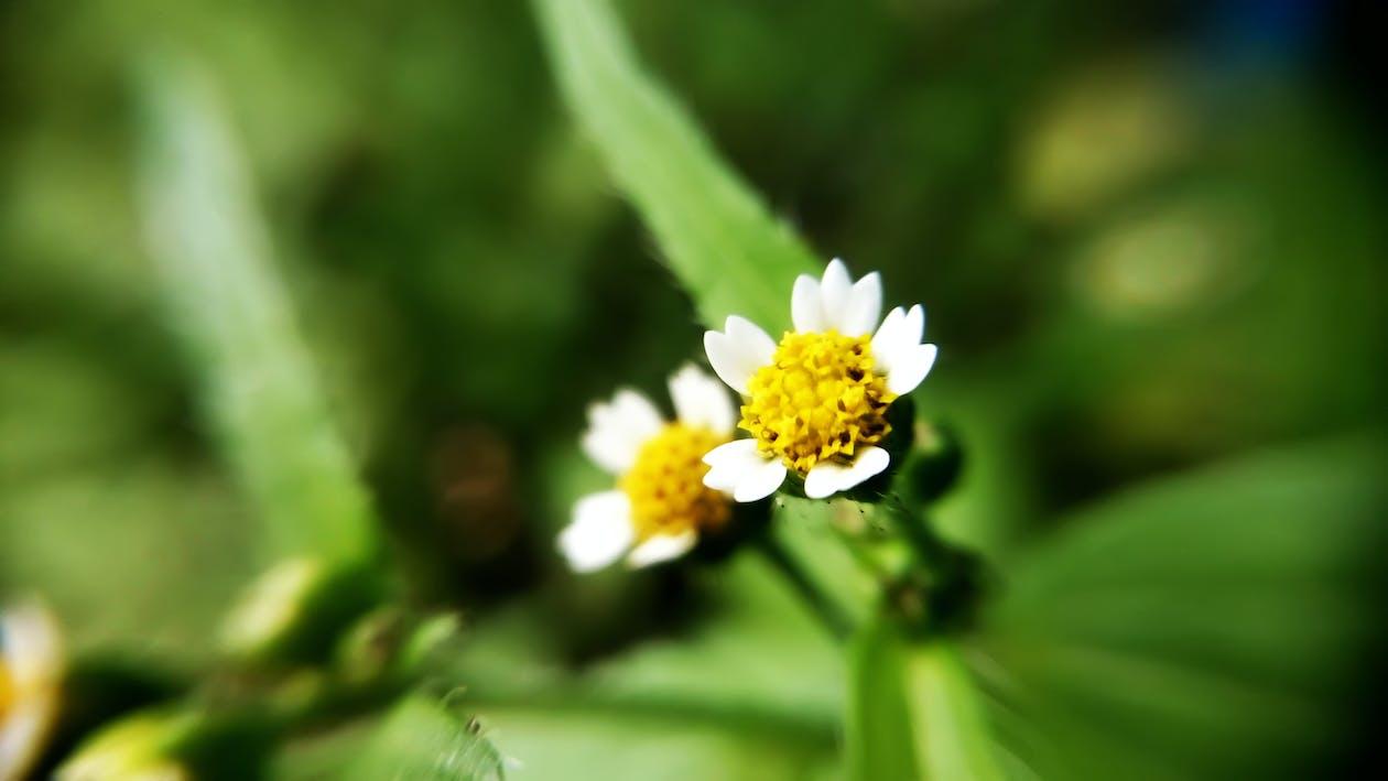 bonic, flora, flors