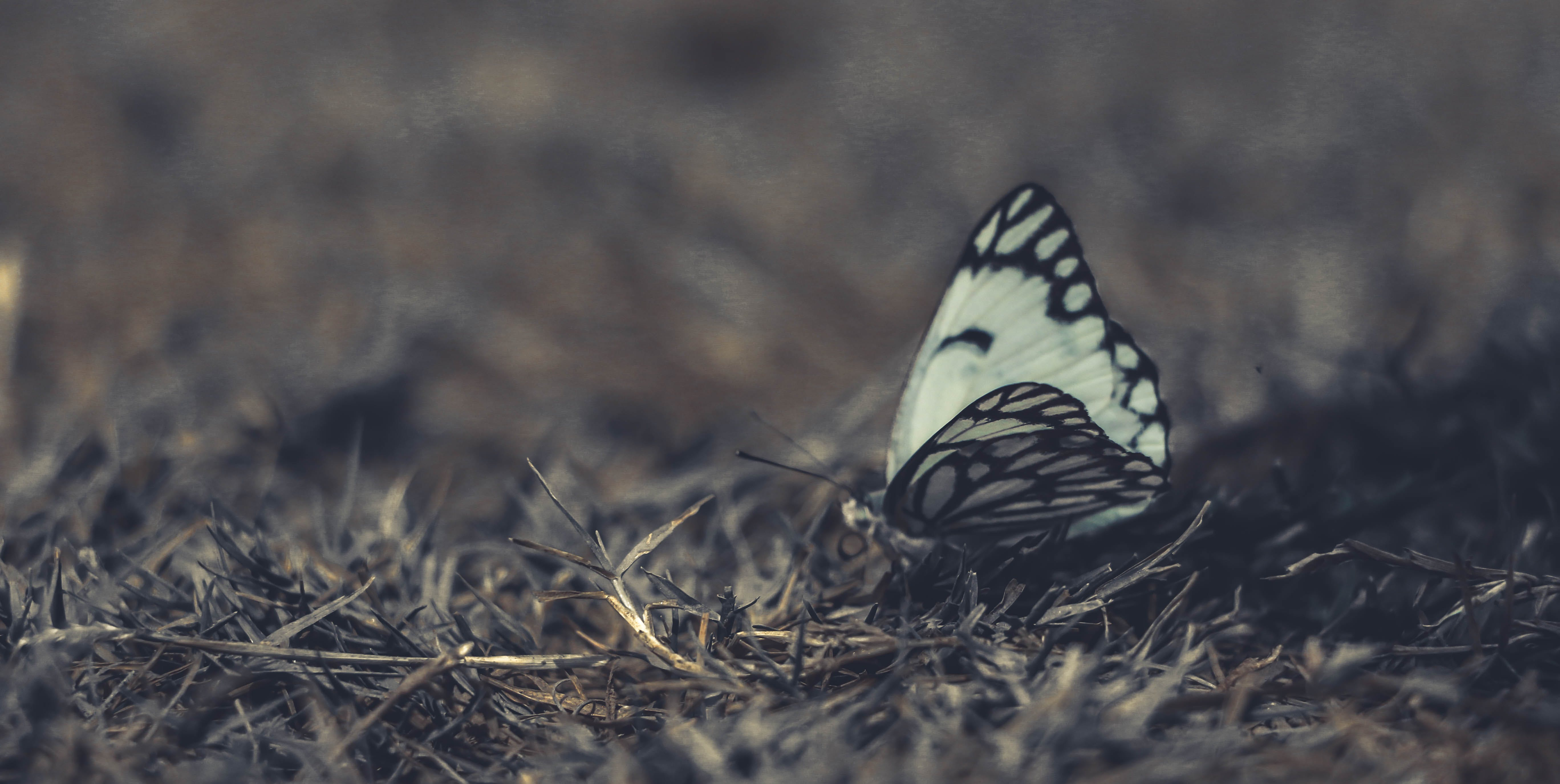White and Black Butterfly on Grass in Close-up Photography
