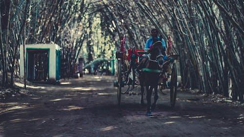 Immagine gratuita di alberi, carrello, cavallo, giorno soleggiato