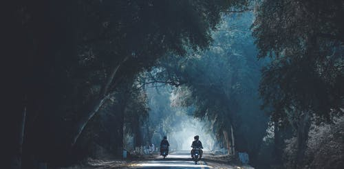 Two People Riding Motorcycle in the Middle of the Forest