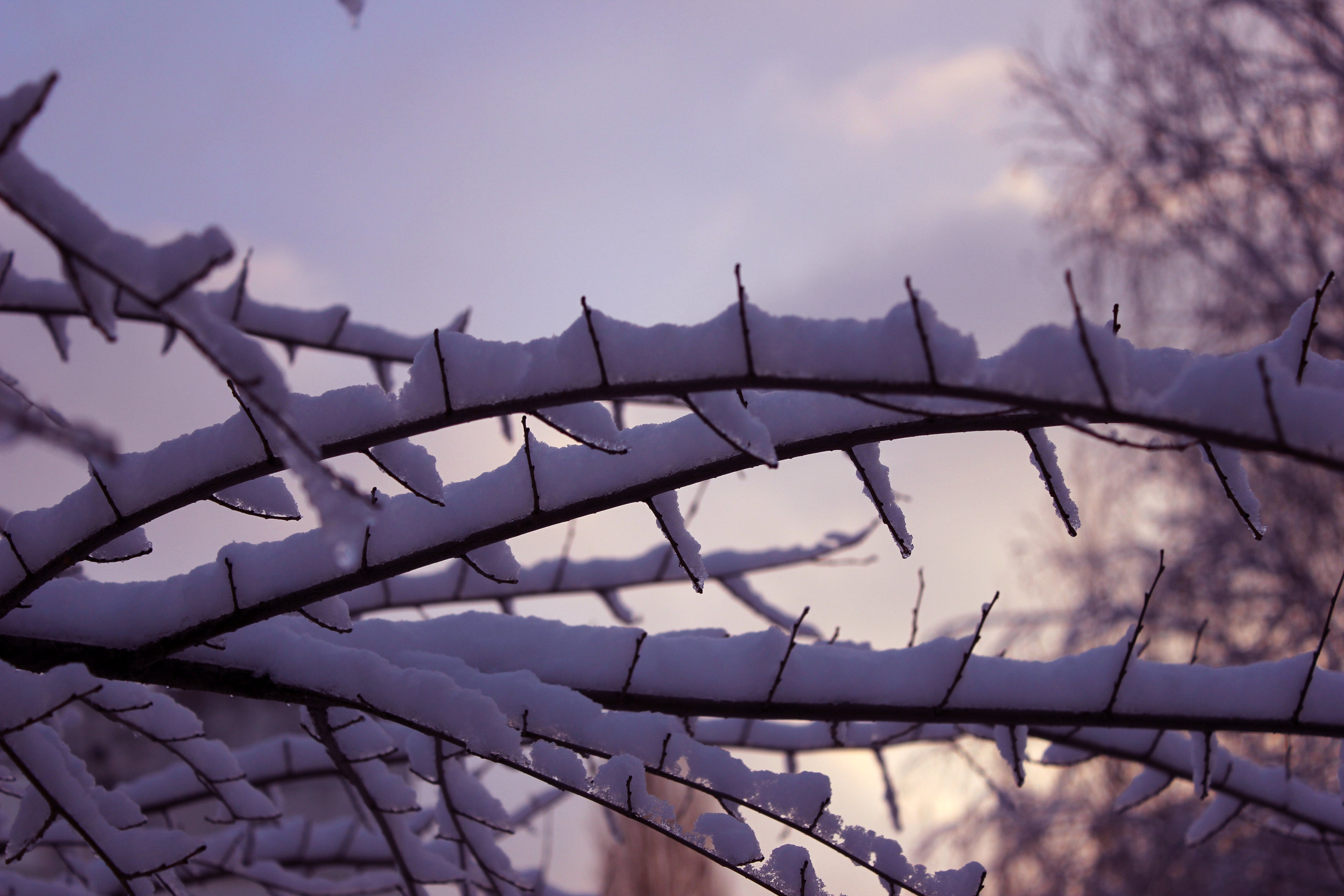 Free stock photo of branch, cold, detail, nature