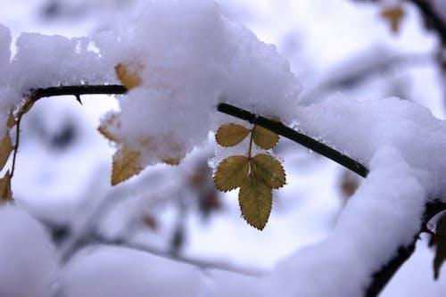 Foto d'estoc gratuïta de branca, constipat, detall, hivern