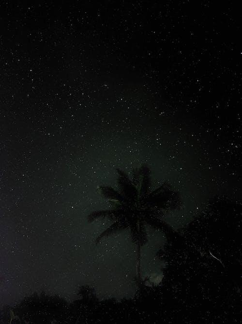 Green Coconut Tree Under Starry Night