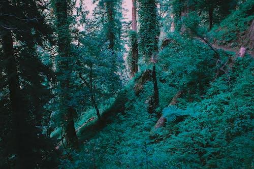Foto stok gratis hijau muda, hutan, pengeditan foto, pohon