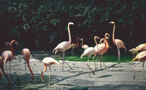 Foto stok gratis gambar latar belakang, hijau, rumah burung, rumput