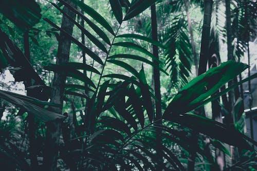 Foto stok gratis daun hijau, daun kering, hari hujan, hutan