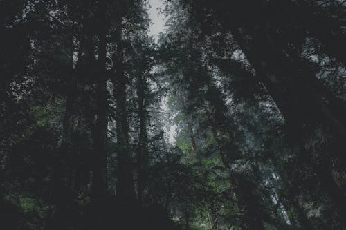 Foto stok gratis Adobe Photoshop, alam, awan gelap, cahaya