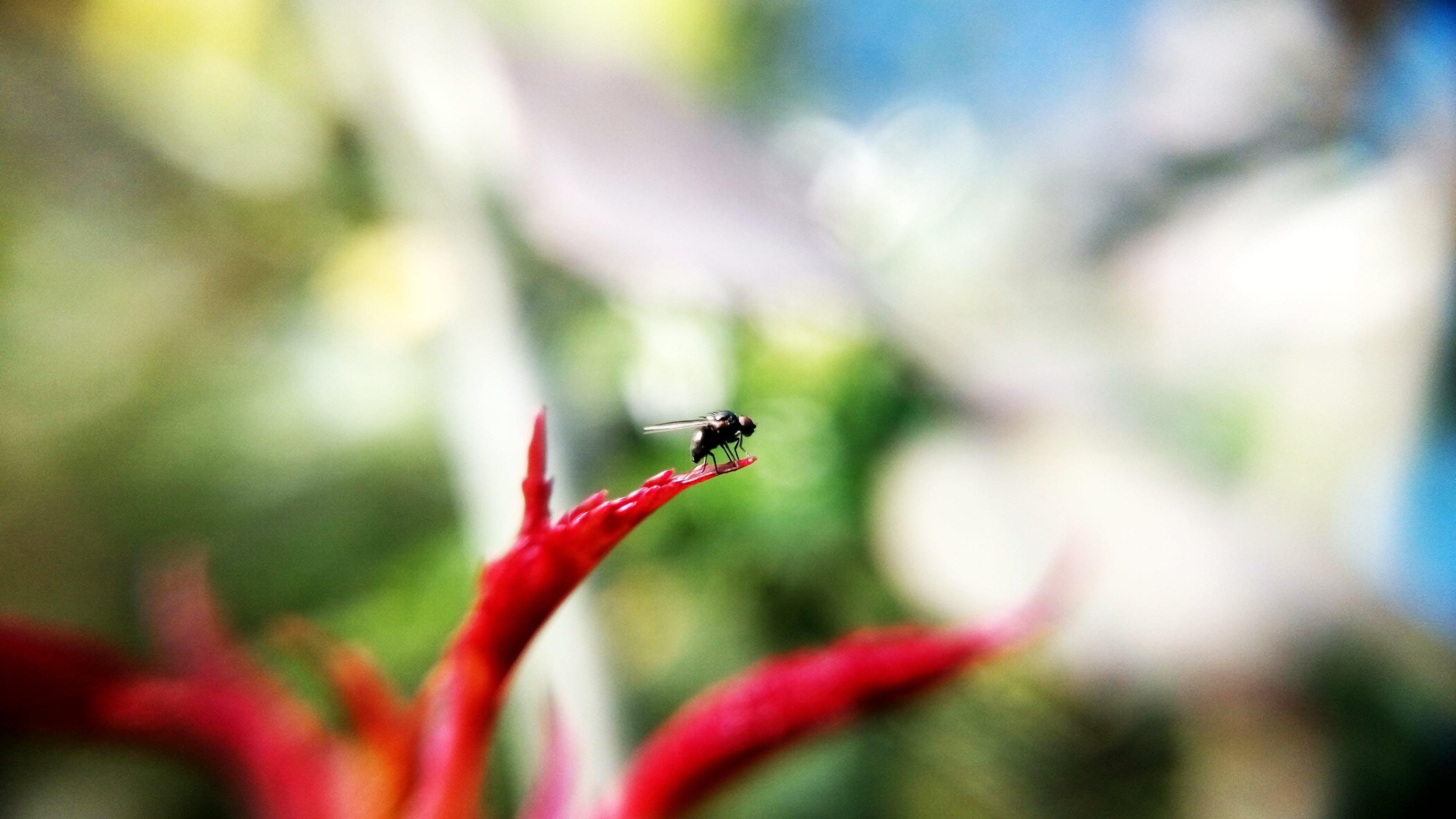 Black Insect on Red Plant