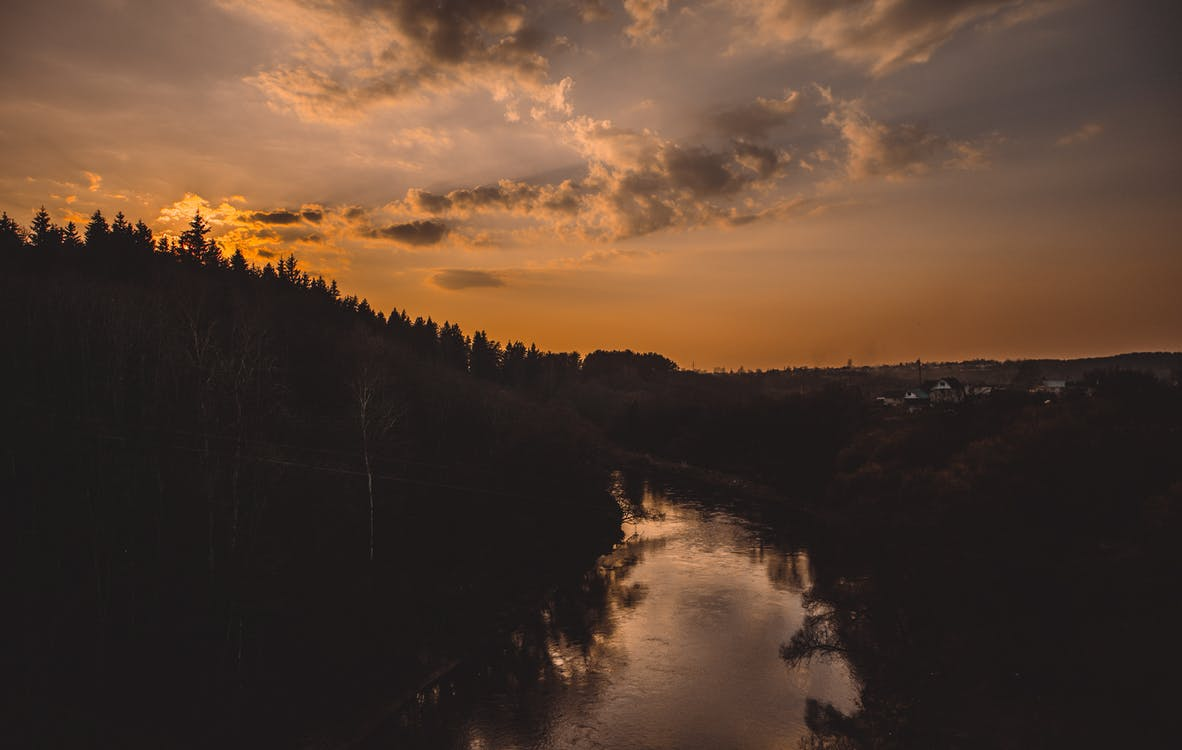 Silhouette of Trees Beside River