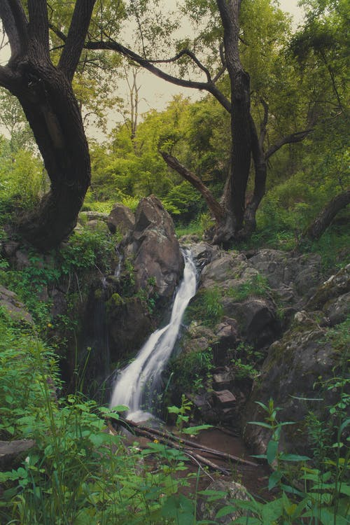 Free stock photo of calm place, calm waterfall, dark forest background