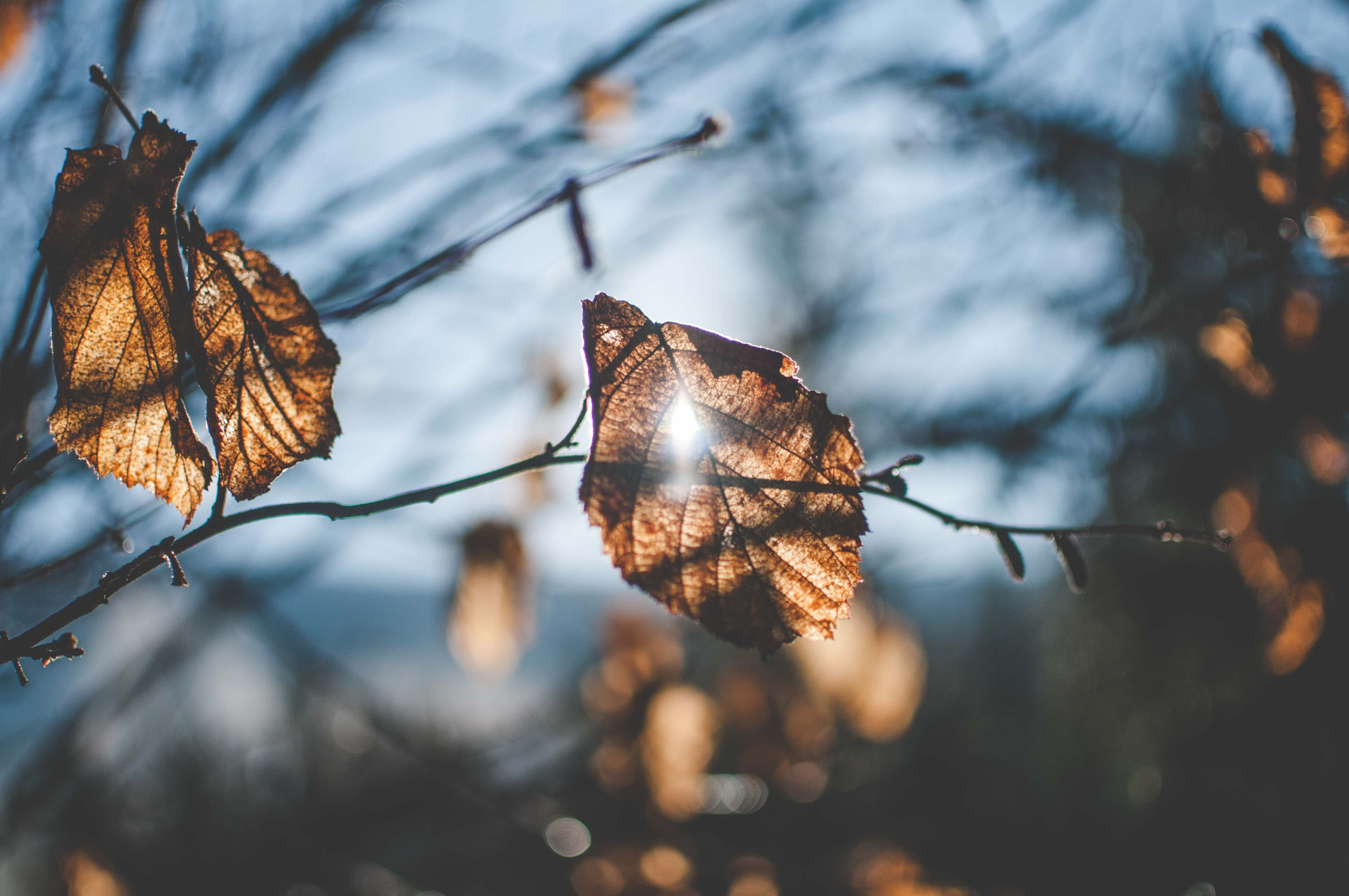 Free stock photo of autumn, autumn leaves, branches, fall
