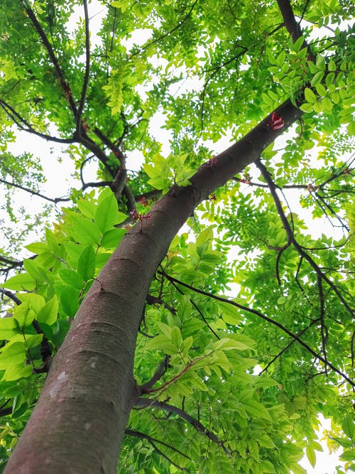 Free stock photo of beauty in nature, dark green leaves, green background
