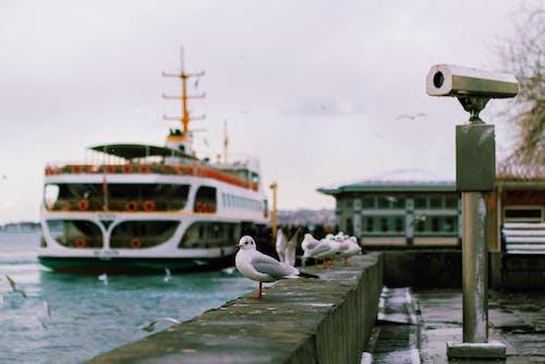 Free stock photo of bird, boat, bridge