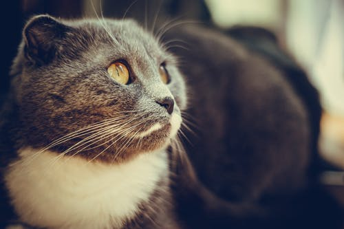 Close-Up Shot of a Cute Cat