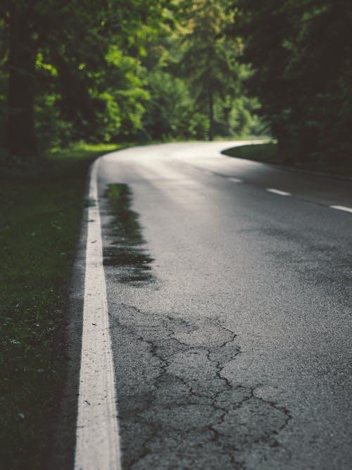 Road Between Tall Trees