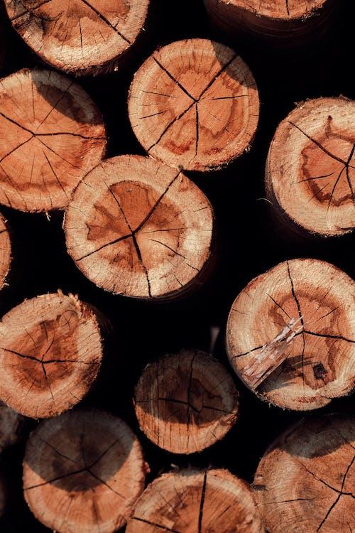 Foto stok gratis api, bagian, batang pohon