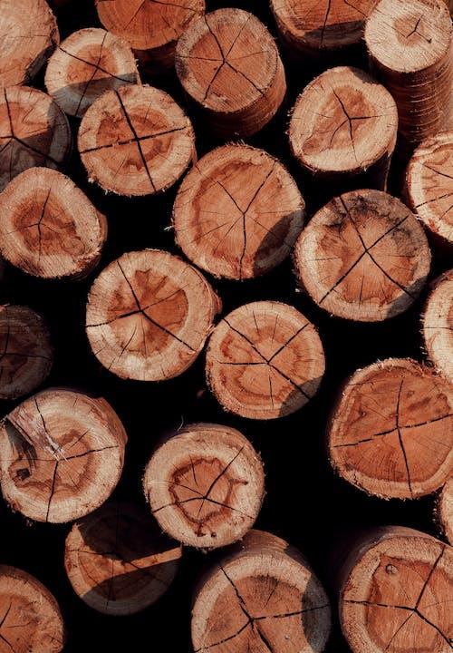 Free stock photo of bark, chopped wood, close up