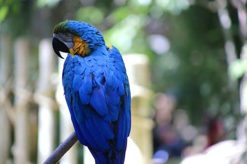 Gratis arkivbilde med papegøye