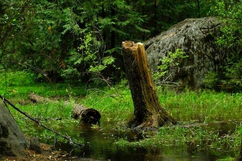 Gratis arkivbilde med stubbe, yosemite