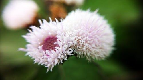 Foto d'estoc gratuïta de bellesa, bonic, flors, flors boniques