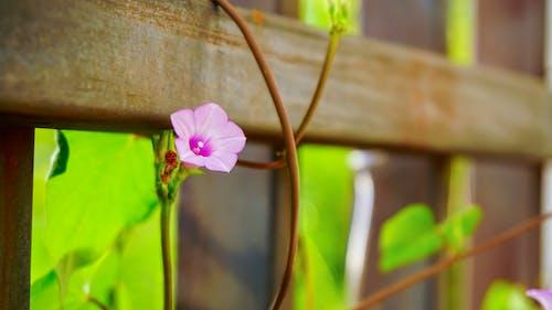 Free stock photo of beautiful flowers, focus, garden