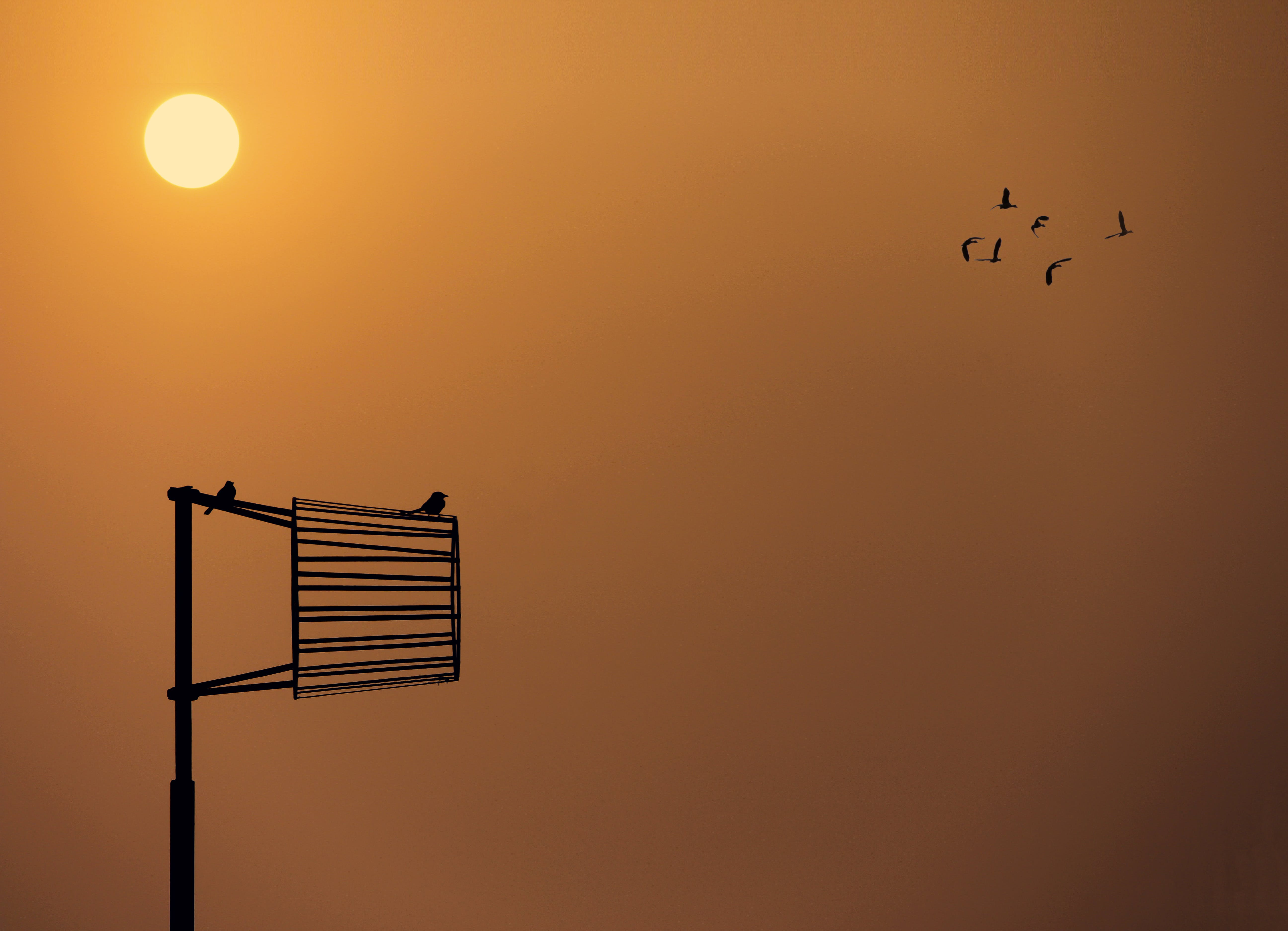Free stock photo of alone, birds, golden sunset
