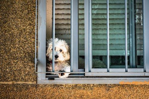 Free stock photo of dog, perro, pet