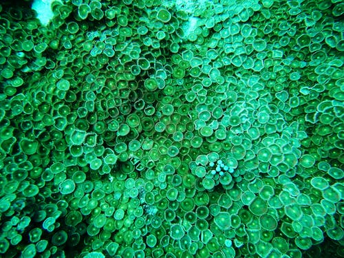 Free stock photo of coral, sea