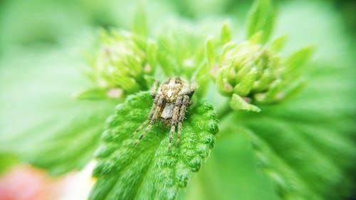 Foto d'estoc gratuïta de aranya, bellesa, bonic, fons de pantalla de la natura
