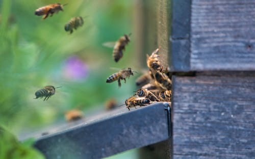 Free stock photo of beehive, bees, selective focus