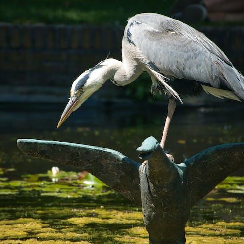 Free stock photo of duck statue, grey bird, heron