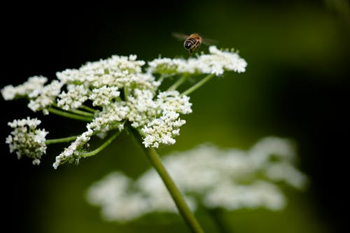 Brown and Black Bee on Purple Flower