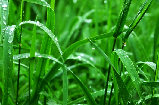 Free stock photo of nature, grass, dew, green