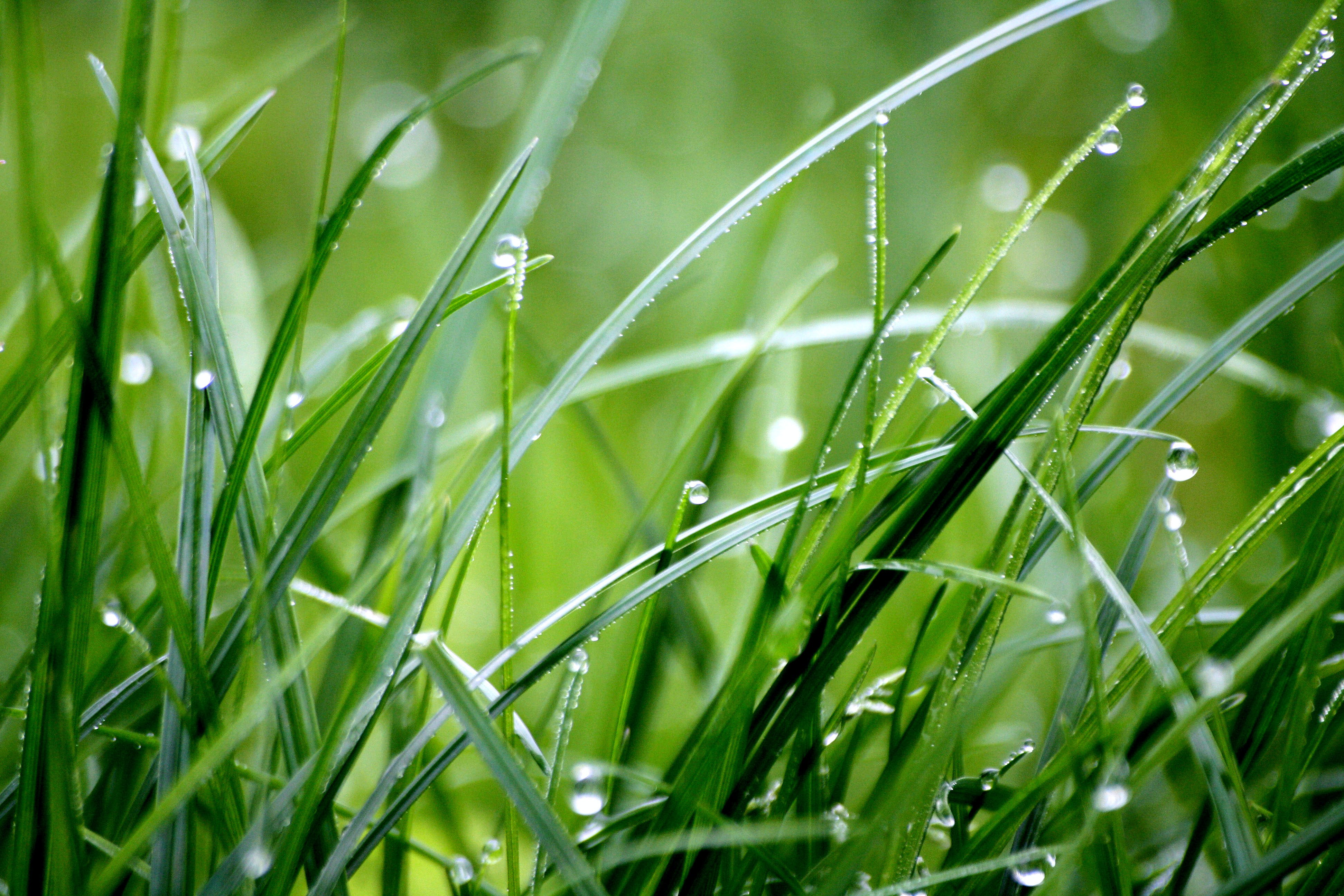 Macro Photography of Droplets on Grass