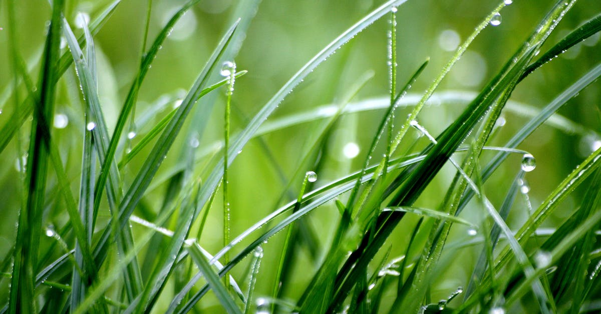 Macro Photography of Droplets on Grass · Free Stock Photo