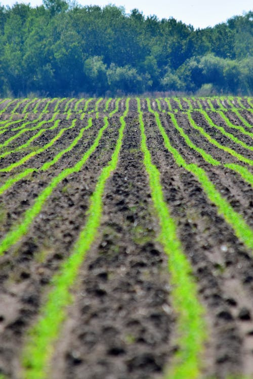 Free stock photo of crops, farming, field