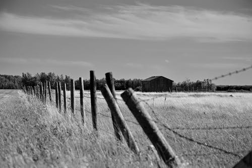 Free stock photo of b amp w, barb wire, barbed wire