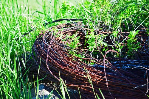 Free stock photo of barb wire, coil, discarded