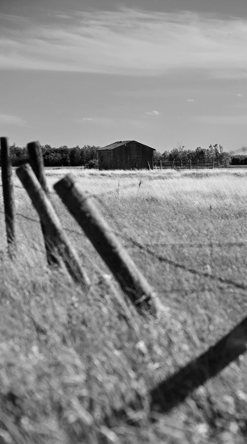 Free stock photo of b amp w, barb wire, black and white