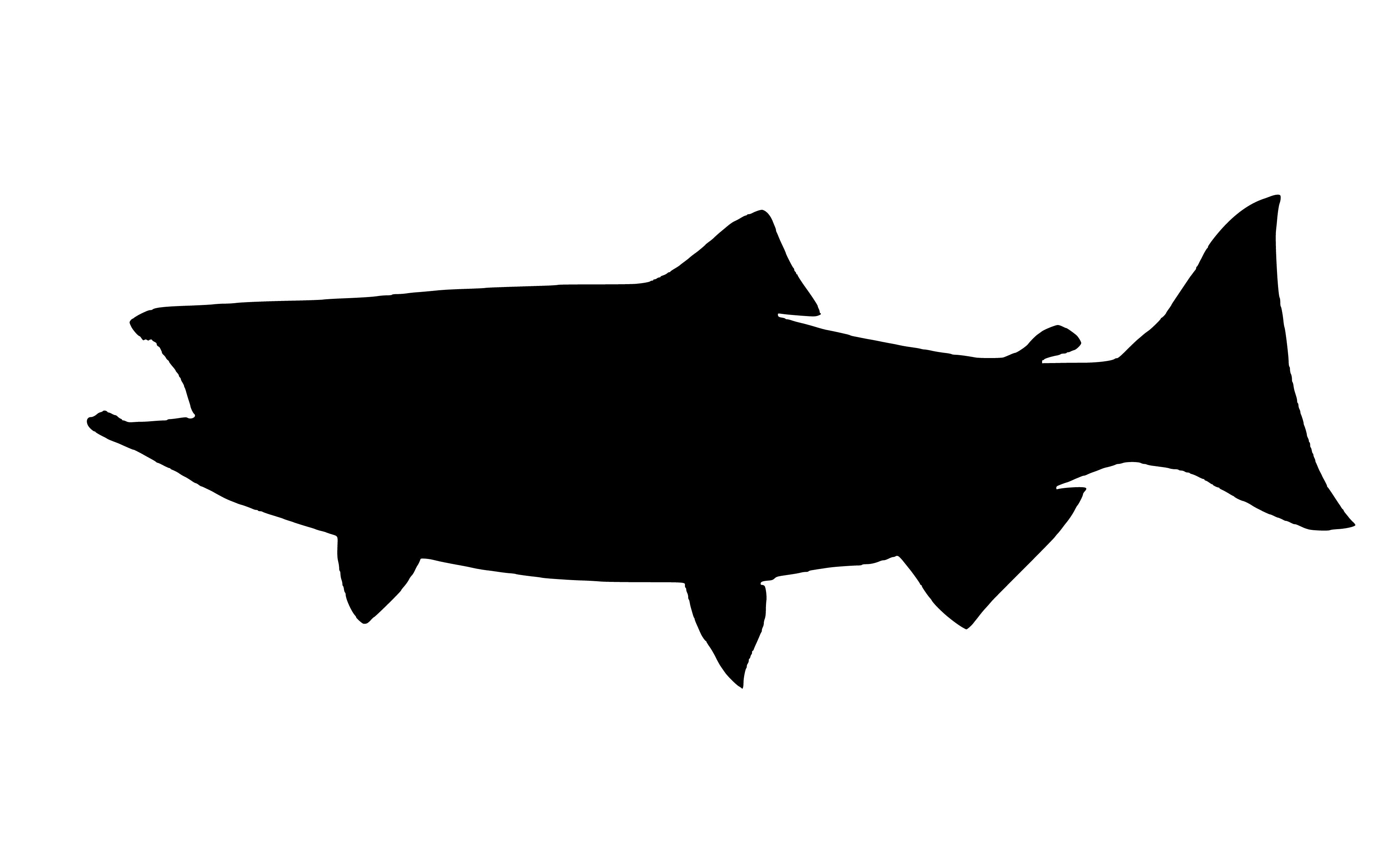 Free stock photo of sea, silhouette, fish, king