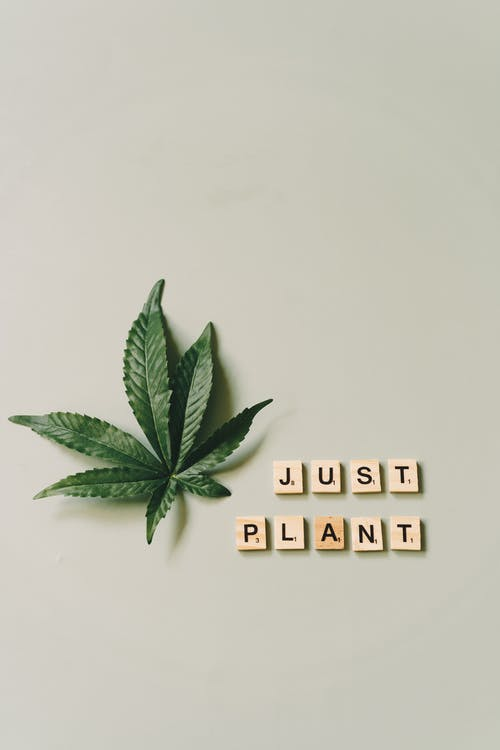 Close-Up of Scrabble Tiles beside a Marijuana Leaf