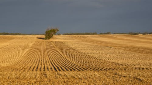 Free stock photo of agriculture, landscape, wheat