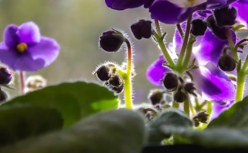Ingyenes stockfotó finom, közelkép, lila virágok témában