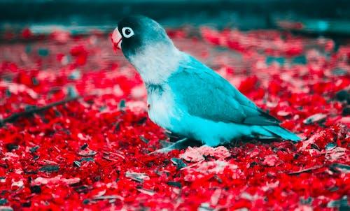 Foto stok gratis alam, binatang, bulu, burung parkit