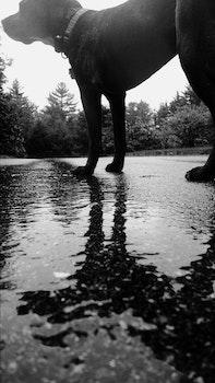 Free stock photo of animal, dog, pet, rain