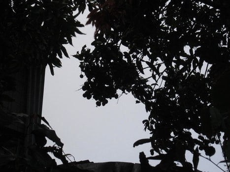 Free stock photo of shadows, fruit, mangos