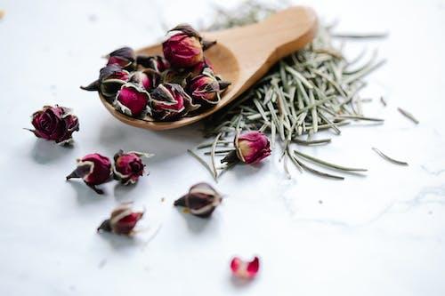 Gratis stockfoto met advent, adventkalender, bloem